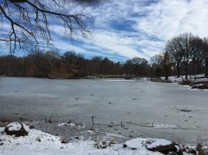 Central Park after a mild snowfall