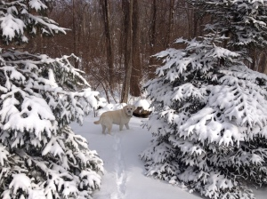 More time to dash through the snow with my puppy!