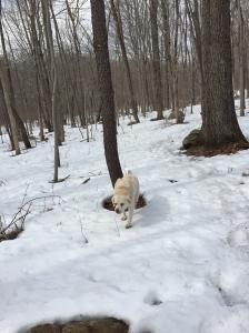 Sasha in the snow