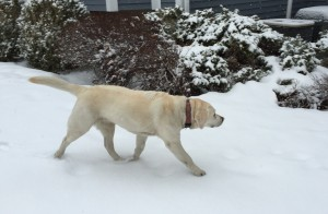 Marching through the spring snow